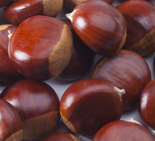 where do sweet chestnuts come from