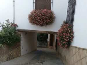 flowers decorate every house